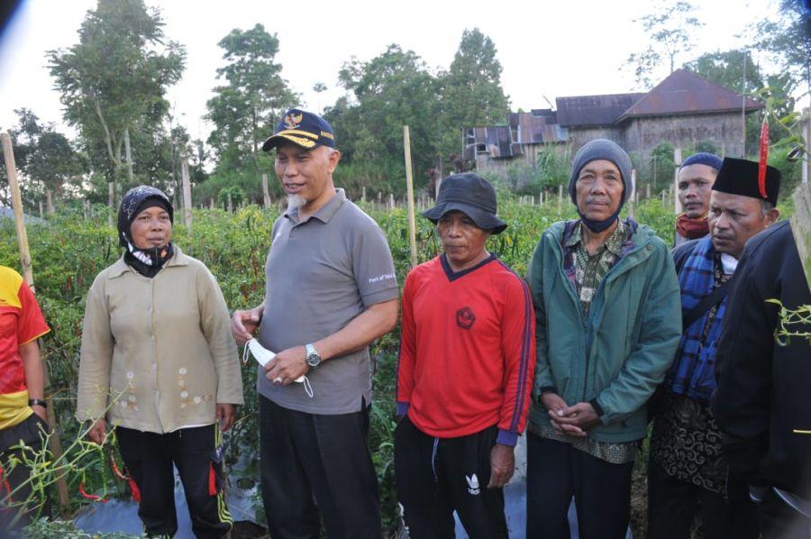 Gubernur Mahyeldi Berbaur dengan Petani Ikut Panen Cabai di Agam